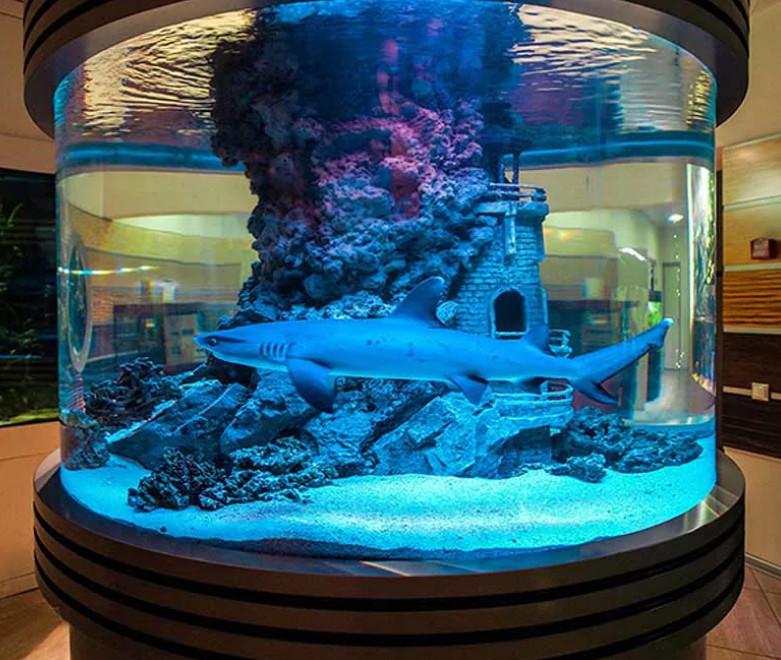Круглый аквариум для акулы