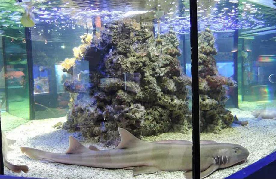 Оформление аквариума для акулы